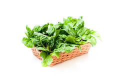 Bunch of green raw spinach leaves close up differential focus. Brown basket with  green raw spinach leaves, close up differential focus on white background Stock Images