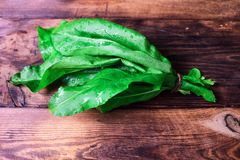 A bunch of green sorrel Royalty Free Stock Photography