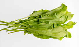 Bunch of green sorrel. A small bunch of green sorrel lies horizontally on a white field Stock Image