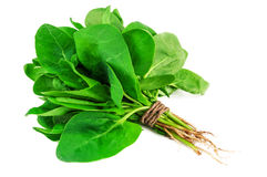 Bunch of green spinach Stock Photography