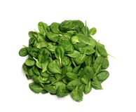 Bunch of fresh green spinach on white isolated royalty free stock photo