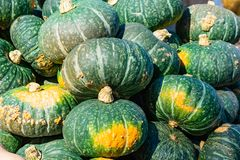 A bunch of green yellow pumpkins royalty free stock images