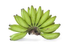 Bunch of green young bananas Stock Images