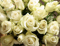 Bunch of greenish white roses, background Stock Images