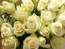 Bunch of greenish white roses, background Royalty Free Stock Image