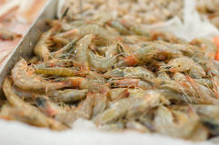 Bunch of grey Shrimps on table in supermarket Royalty Free Stock Image