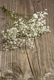 Bunch of Gypsophila (Baby's-breath) Royalty Free Stock Image