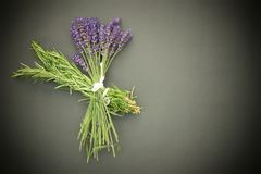 Bunch of handpicked Rosemary and lavender stock photography