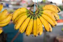 Bunch of hanging banana royalty free stock photos