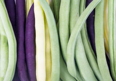 Bunch of harvested bean three varieties closeup. Bunch of harvested bean Purple, green and yellow Wax Snap Beans Royalty Free Stock Image