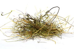 A bunch of hay. Isolated hay on white ground stock photography
