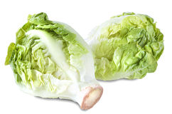 Bunch Head of Fresh Green Salad Isolated Stock Image