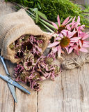 Bunch of healing coneflowers, estragon and sack with dried echin Stock Photos