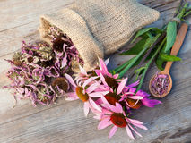 Bunch of healing coneflowers and sack with dried echinacea flowe Stock Photos
