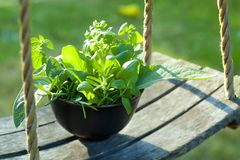 Bunch of herbs royalty free stock photography