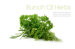 Bunch Of Herbs. Studio macro of a bunch of fresh herbs, consisting of Dill, Curled Leaf Parsley and Rosemary against a white background. Copy space royalty free stock image
