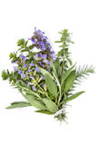 Bunch of Herbs Bouquet Garni Isolated on White Stock Photography