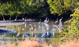 Bunch of Herons Royalty Free Stock Photography