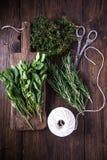 Bunch of home garden fresh herbs Stock Photos