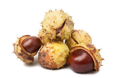 Bunch of horse chestnuts Stock Photos