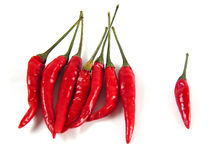 Bunch of hot items :-). Isolated still of red chillis (all focused Royalty Free Stock Photos