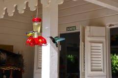 A bunch of hummingbirds Stock Photos