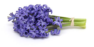 Bunch of hyacinth Royalty Free Stock Photos