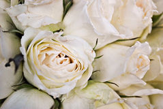 Bunch of Imperfect White Roses Bouquet Royalty Free Stock Photography