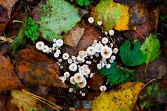 Bunch of inedible mushrooms Stock Photos