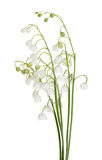 Bunch of isolated lily-of-the-valley flowers. Lily-of-the-valley flowers isolated on white background Stock Photo
