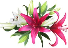 Bunch of isolated red and white lilies Stock Photo