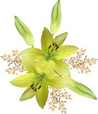 Bunch of isolated yellow lily flowers Stock Photos