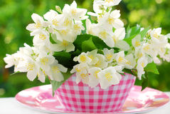 Bunch of jasmine flowers Royalty Free Stock Photography