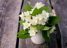 Bunch of jasmine flowers on wooden garden table Royalty Free Stock Photos