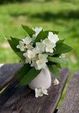 Bunch of jasmine flowers on wooden garden table Stock Image