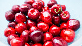 A bunch of juicy red cherries Stock Image