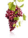 Bunch of juicy red grapes stock images