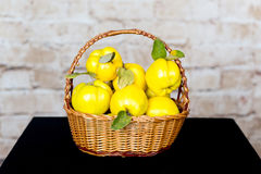 Bunch of juicy yellow quinces fruits. Quince. Basket with delicious juicy quince. Vintage quince late autumn. Stock Photos