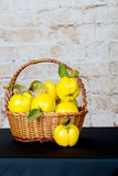 Bunch of juicy yellow quinces fruits. Quince. Basket with delicious juicy quince. Vintage quince late autumn. Royalty Free Stock Images
