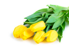Bunch of juicy yellow tulips Royalty Free Stock Image