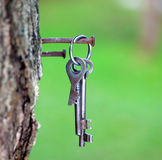 Bunch of keys on a rusty nail Royalty Free Stock Images