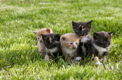Bunch of kittens Royalty Free Stock Photo