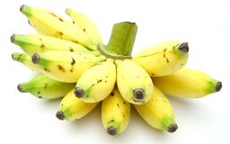 Bunch of Lady Fingers Banana. Bunch of Lady Finger Banana also known as Sugar bananas, Sucrier, Niños, Bocadillos, Fig bananas, or Date bananas Stock Photography