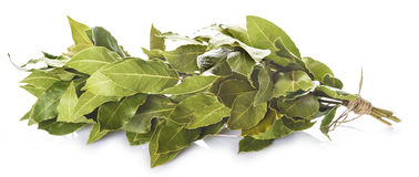 Bunch of laurel leaves isolated on white background Stock Image