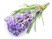 Bunch of lavandula or lavender flowers isolated Stock Photo