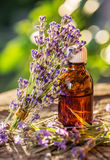 Bunch of lavandula or lavender flowers and oil bottle. Stock Image
