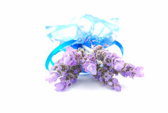 Lavender bunch on white stock images