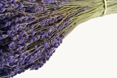 A bunch of lavender. Isolated on a white background Stock Photography