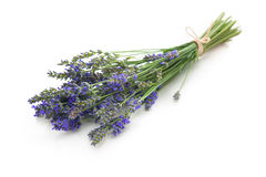 Bunch of lavender. Flowers on white background stock photo