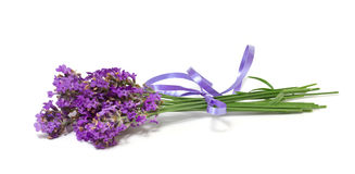 Bunch of lavender. On white background Stock Photography